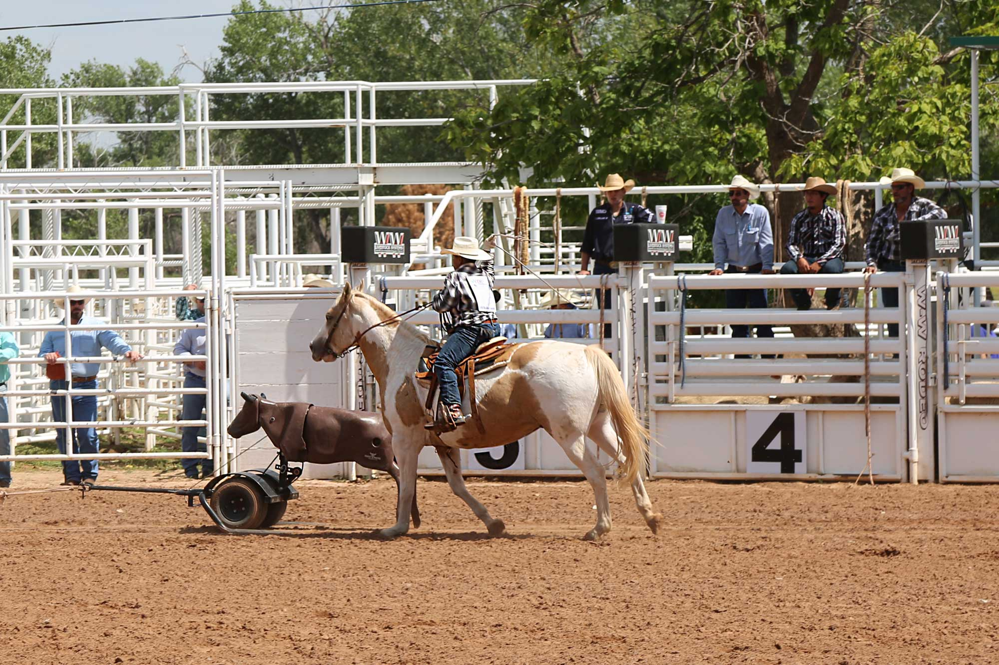 Junior roping