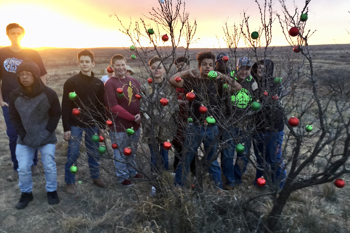 Boys-n-Tree