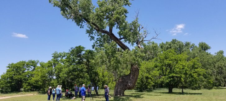 Texas Historic Tree Project recognizes 'Frenchie's Tree' at Boys Ranch